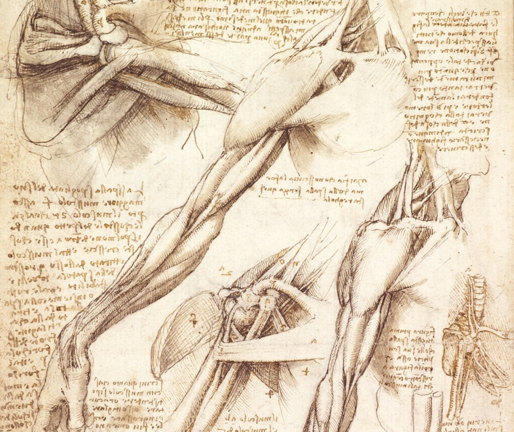 Leonardo da vinci anatomy drawings 9363897 - follow4more.info